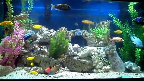 aquarium decor de fond aquarium cichlid 233 s africain nouvelle d 233 co