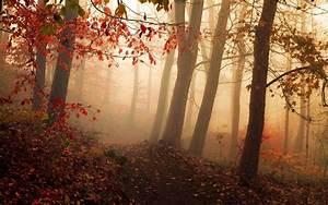 Nature, Landscape, Mist, Forest, Fall, Path, Sunrise
