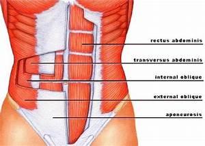 Svaly anatomie