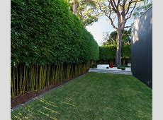 Best 25+ Bamboo garden ideas on Pinterest Bamboo