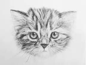 cat drawings cat drawing by ioan decean dribbble