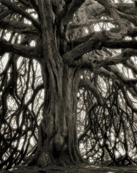 Better Essays In Sixty Minutes by Spends 14 Years Photographing World S Oldest Trees