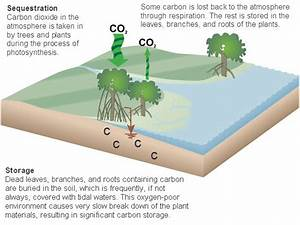 What Are Carbon Sinks And Why Are They Important In Africa