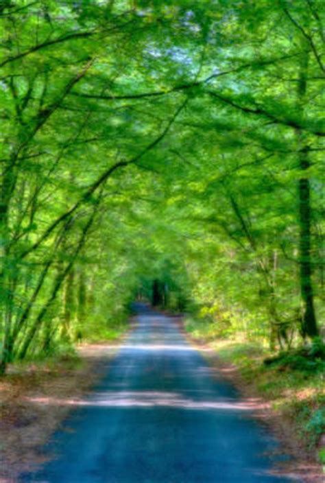 beautiful path pictures   images  facebook