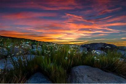 Nature Nevada Sierra Landscape Mountains Wallpapers Chamomile