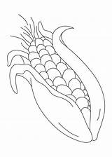 Coloring Corn Sweet Clipart Sheet Indian Popular Library Clip sketch template