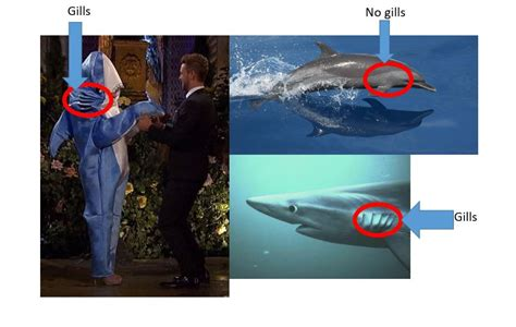Bachelor Contestant Wears A Shark Costume And Calls It A
