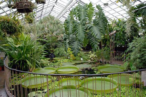 Botanischer Garten Leipzig Parken by Ginkgo Biloba Salisburia Adiantifolia Gingko Ginkgo