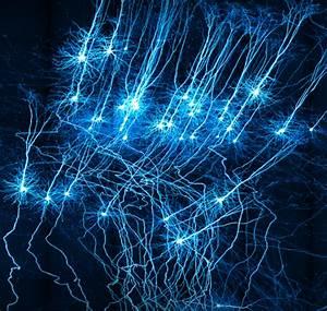 Neuroscientists Draw Up A  U2018parts List U2019 Covering 133 Types