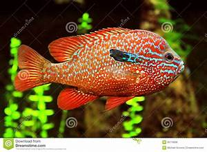 Colorful Fish stock photo. Image of marine, swimming ...