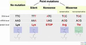 What is Mutation? - Cause and Different Types of Mutation