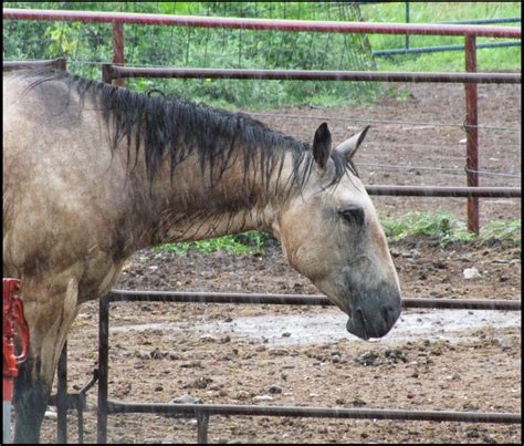 rain horse beauty mtodd