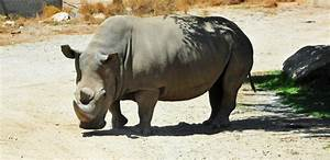10 most endangered species on Earth in 2017