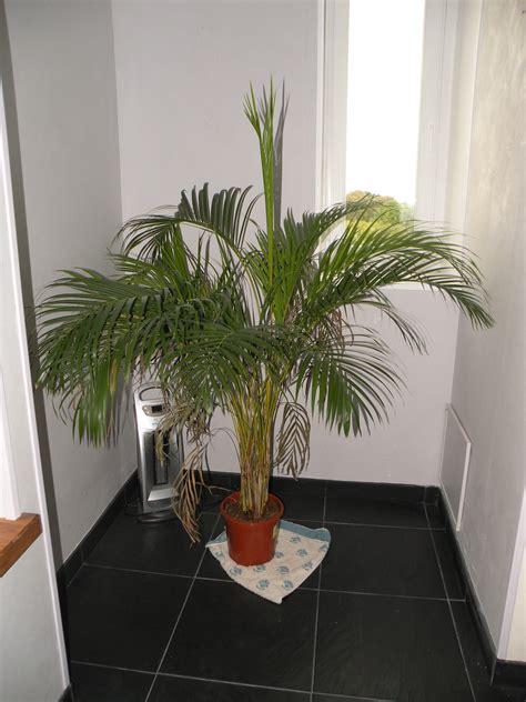 plante pour salle de bain sombre plante pour salle de bain sombre atlub