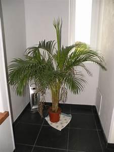 Plante Verte Salle De Bain : quelques belles plantes ~ Melissatoandfro.com Idées de Décoration