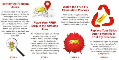fruit fly bar pro insecticide vapor strip  restaurants