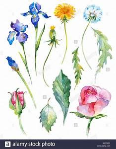 Blumen Bilder Gemalt : aquarell gemalt sammlung von blumen hand gezeichnet blume designelemente auf wei em hintergrund ~ Orissabook.com Haus und Dekorationen