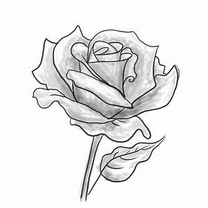 How to Draw a Rose Flower How to Shade a Rose Flower ...
