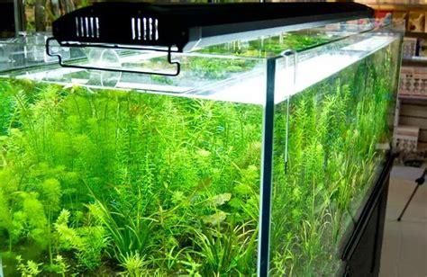 eclairage led pour aquarium plante achetez en gros led aquarium en ligne 224 des grossistes led aquarium chinois