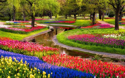 garden tulips flower jpg hi garden flower hd wallpapers