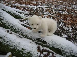 Arctic Fox Baby - Birgitte Krag Hansen
