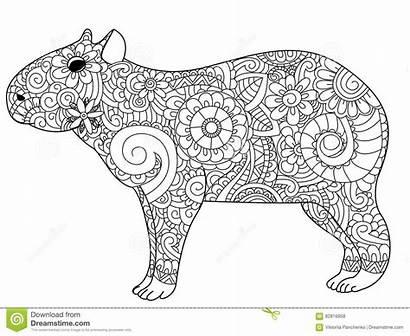 Capybara Coloring Adults Vector Herbivorous Adult Illustration