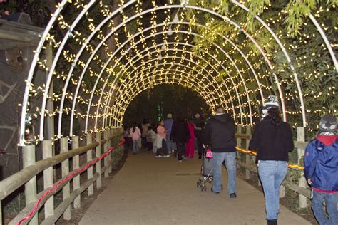 fresno chaffee zoo third annual zoolights