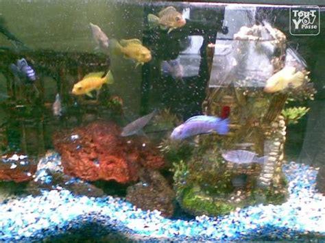 aquarium cichlid 233 s dourges 62119