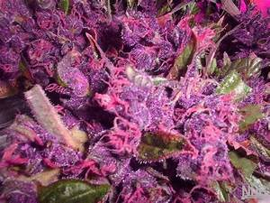 Some Purple To Brighten Your Day | The Nug