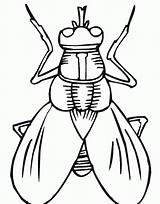 Insect Outline Coloring Fly Pages Printable Cartoon Popular sketch template