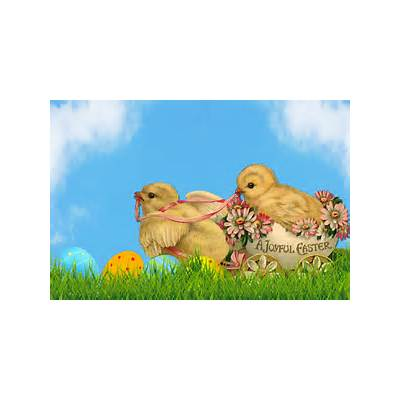 Easter Chicks Free Stock Photo - Public Domain Pictures