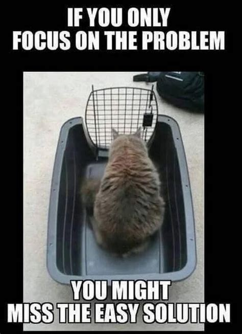 Cat Problems Meme - growth mindset resources if you only focus on the problem