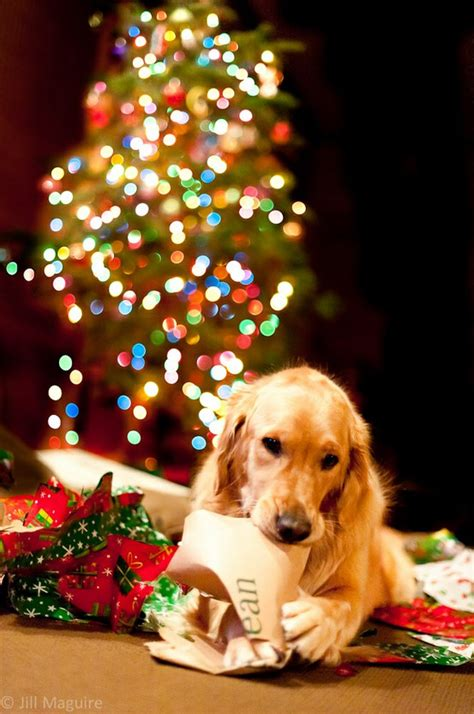 happy christmas with animals cute animal pictures and videos blog