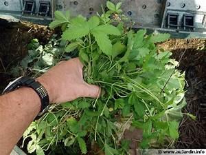 Que Mettre Au Sol Pour éviter Les Mauvaises Herbes : composter les mauvaises herbes ~ Dailycaller-alerts.com Idées de Décoration
