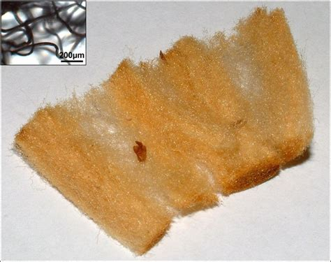 typical cigarette filter    glass wool