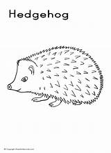 Hedgehog Coloring Porcupines Line A4 Colour Animals Cartoon Draw Drawings Coloringbay Suitable Printing Regular Poster sketch template