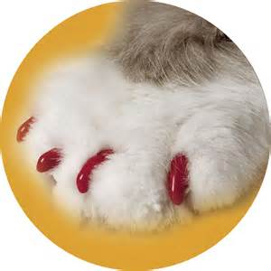 nail caps for cats soft claws cat nail caps petco