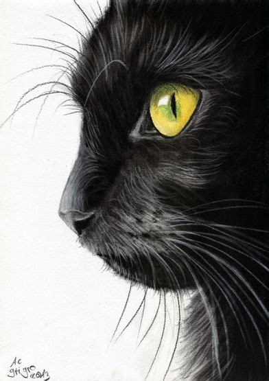 ideas  animal drawings  pinterest pencil