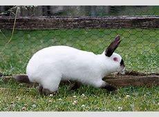 Kaninchenrassen Übersicht und Bilder