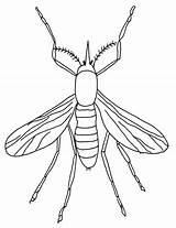 Coloring Insect Pages Coloringpages1001 Bugs sketch template