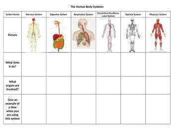 Human Body Systems Graphic Organizer  Science Human Body  Pinterest  Human Body Systems, Body