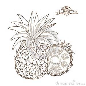 Pineapple Outline Drawing