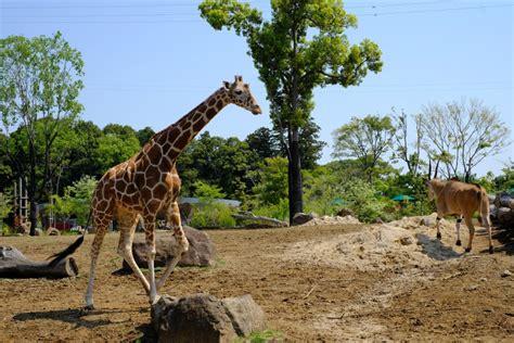 ズーラシア 動物園