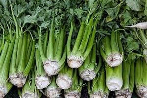 Pungent Celery