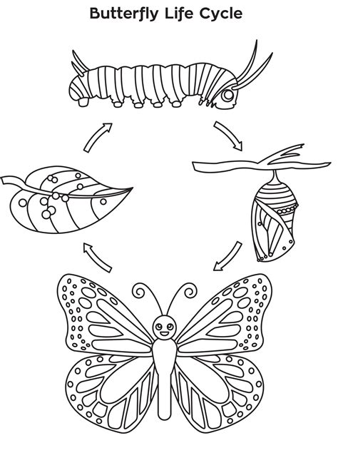 meeting  butterfly life cycle coloring sheet butterfly life cycle butterfly life cycle