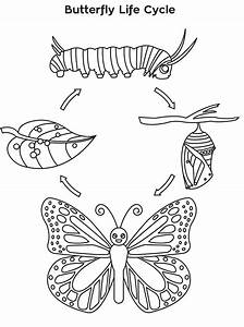 Meeting 6  Butterfly Life Cycle Coloring Sheet