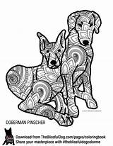 Doberman Coloring Pinscher Pages Designlooter Colouring 35kb 2040 sketch template