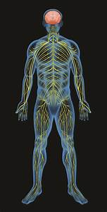 What Is The Autonomic Nervous System And Can We Control It