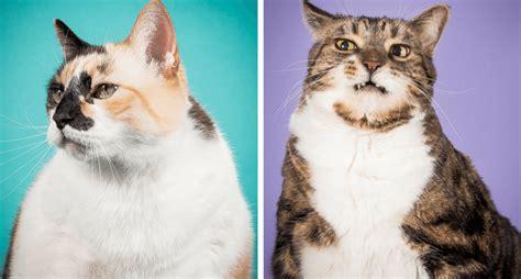 fat cats photographer