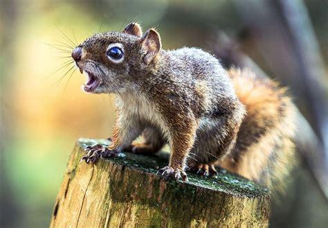 city warns aggressive squirrel  gnawed